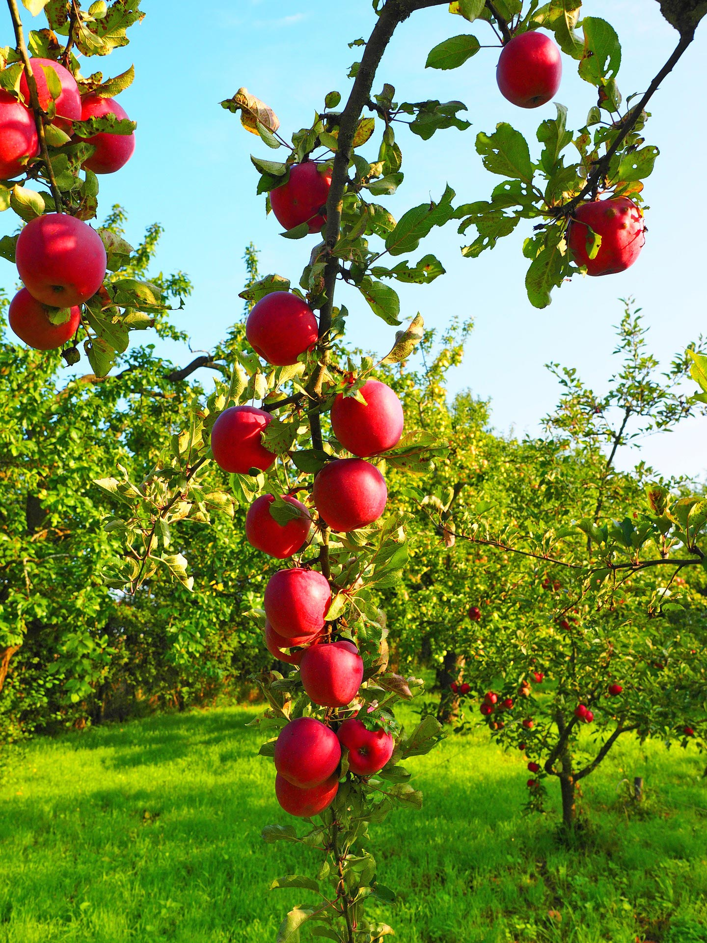 Frisches Obst für frischen Saft