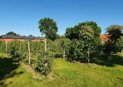 Mosterei Post Altenberge Apfelplantage im Fruehjahr