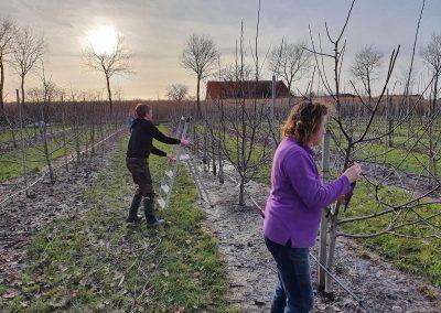 Mosterei Post Altenberge Apfelplantage anpflanzen